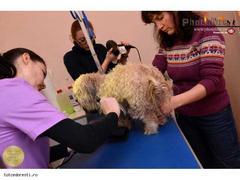 Curs coafor canin la Bucuresti In plus,tunsori gratuite pentru catei