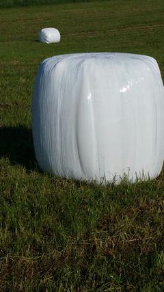 Vand baloti lucerna semisiloz  infoliati